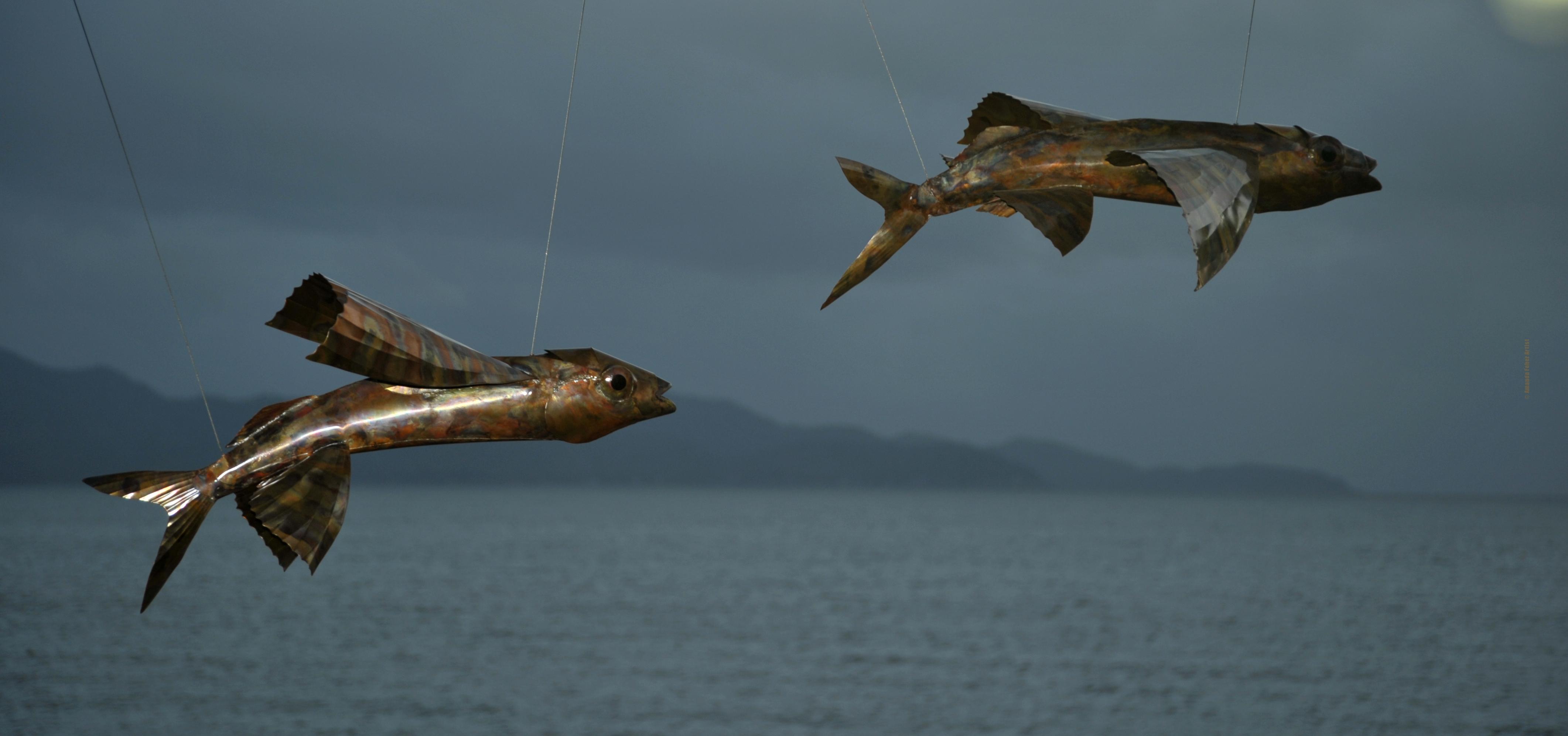 Flight school for The flying fish