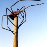 amanda_feher_sculpture_public_art_Oralia_spider_pioneer_park_Townsville_City_Council3